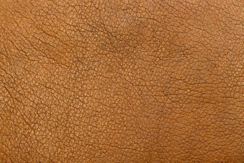 diferentes tipos de pieles